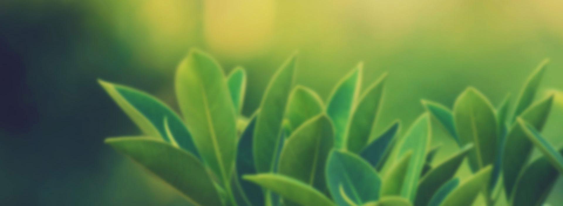 divertikülite-iyi-gelen-bitkiler-nelerdir