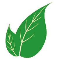 divertikülite-karşı-faydalı-bitkiler